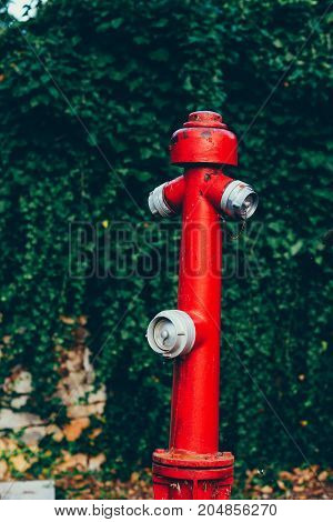 Safety measures. Fire protection. Red fire hydrant surrounded by green grass