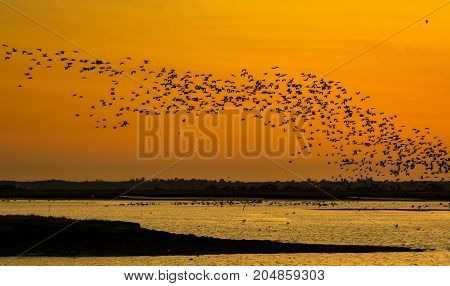 birds flying at sunset in sado estuary in comporta portugal