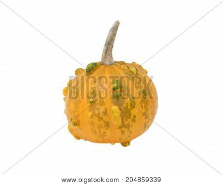 Small Round Orange And Green Warty Ornamental Gourd