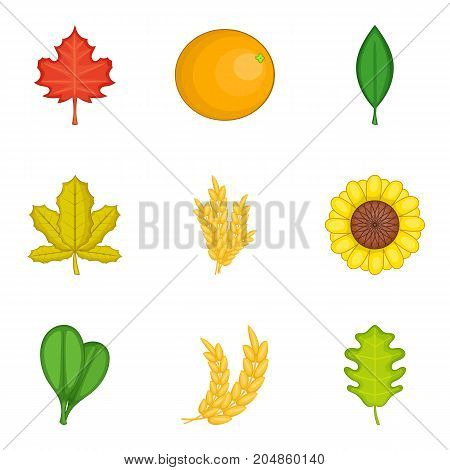 Bloom icons set. Cartoon set of 9 bloom vector icons for web isolated on white background
