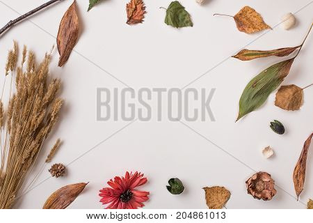 Creative Autumn Background With Empty Space