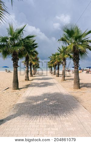 Palm alley to the Adriatic Sea in the resort area of Golem. Albania