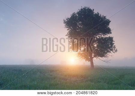 lone tree in the fog at sunrise