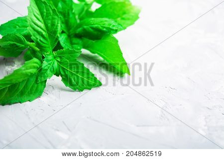Closeup view of green fresh basil in corner with copy space