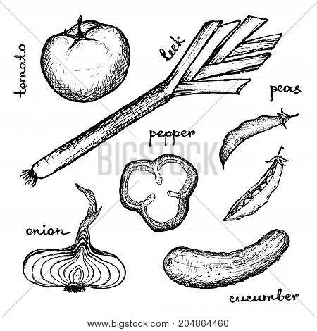 Vegan Menu - Tomato Peas Leek Cucumber Onion Pepper - hand-drawn objects