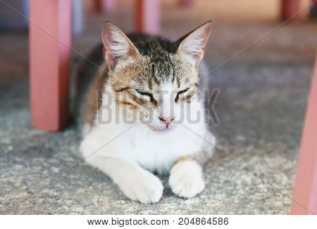 beautiful cat with closed eyes sitting at a greek tavern - Cyclades Greece