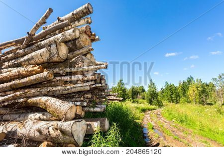 Cut tree logs piled up near a forest road in sunny summer day