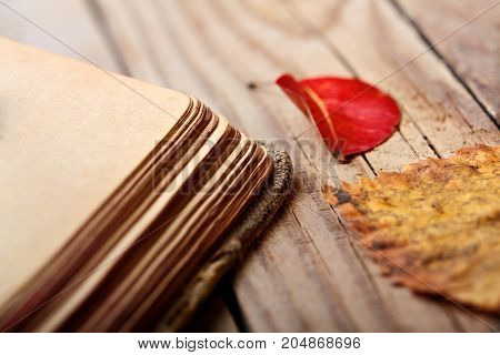 Closeup Autumn Leaves And Opened Book On Wooden Table. Autumn Mood Concept.autumn Background