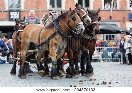 LENNIK BELGIUM - SEP 10 2017: A parade of Belgian Heavy Draft horses for the 25th anniversary of the monument Prins at the market in Lennik. on Sep 10 2017.