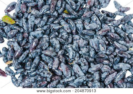 Fresh blue-berried honeysuckle (Lonicera caerulea) blue berry fruits isolated on white background