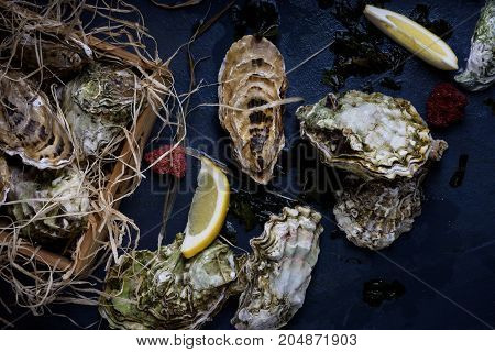Oysters In A Wooden Box. Seafood Produce On Blue Background.