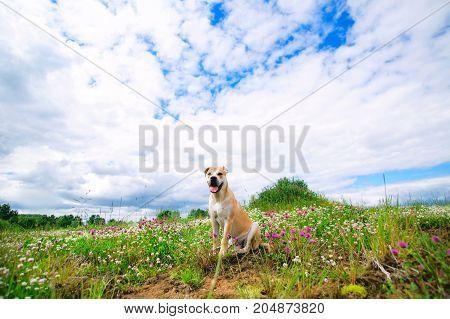Dog Sitting On Lawn