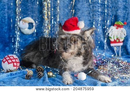 Portrait of a dog sitting on Christmas background