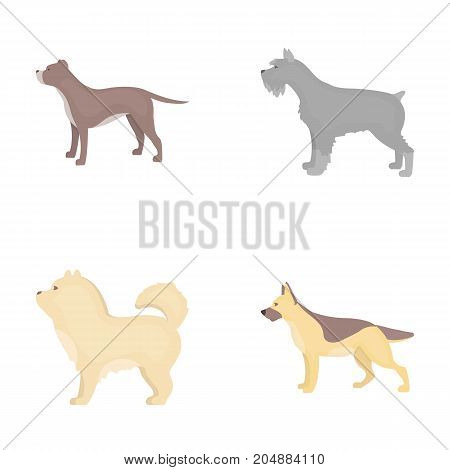 Pit bull, german shepherd, chow chow, schnauzer. Dog breeds set collection icons in cartoon style vector symbol stock illustration .
