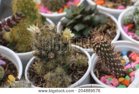 cactus succulent nursery fair sale in bloom