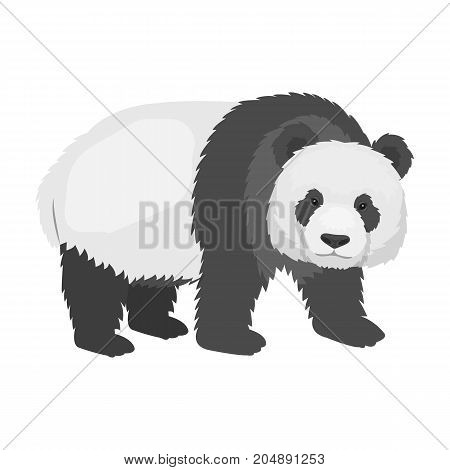 Panda, a bamboo bear. Panda, a rare species of animal single icon in monochrome style vector symbol stock illustration .