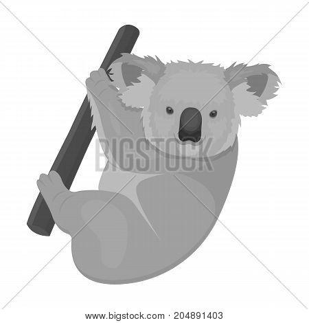 Kuala, marsupial bear on a branch of eucalyptus. Wild mammal of koala single icon in monochrome style vector symbol stock illustration .