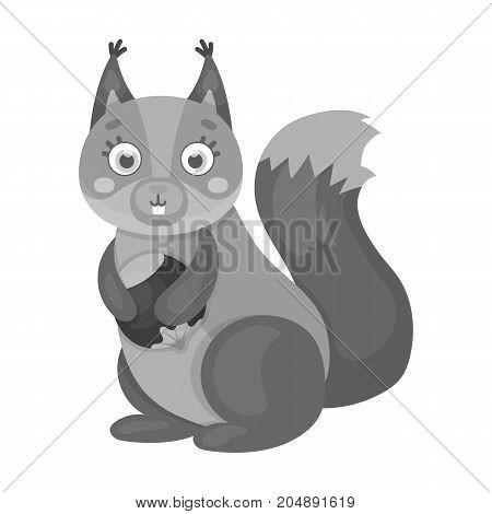 Squirrel, single icon in monochrome style.Squirrel, vector symbol stock illustration .