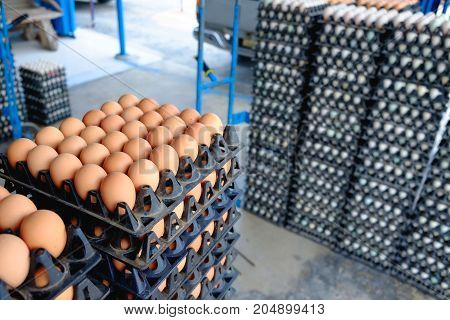 Eggs from hen farm in the package that preserved for sale in wholesale market.