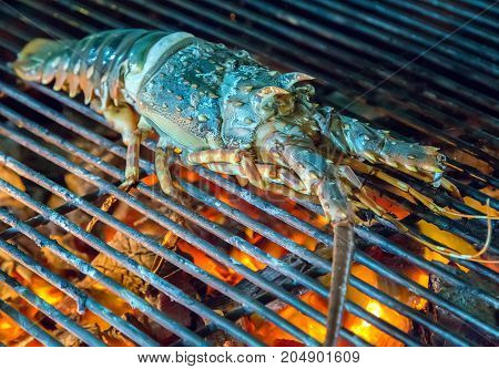 Grill Lobster Preparation