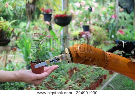 robot hand give the tree in the flowerpot in the greenhouse to hand robot work with human in the smart farm agriculture the robotic technology aim to improving yield efficiency profitability