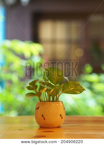 Betel Plant With A Glass, Cup , Vast  In Minimal Style With Wooden Table.