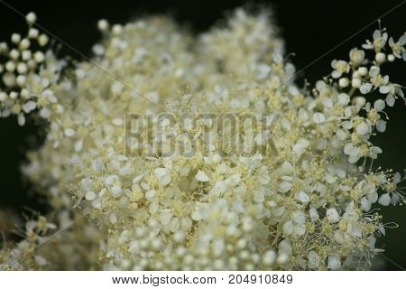 White Wildflower with an abstract appearance and a blackground.