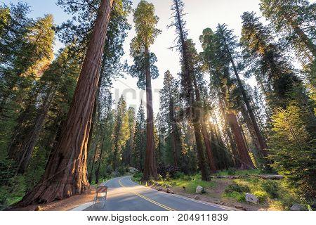 Road through the redwoods. California.