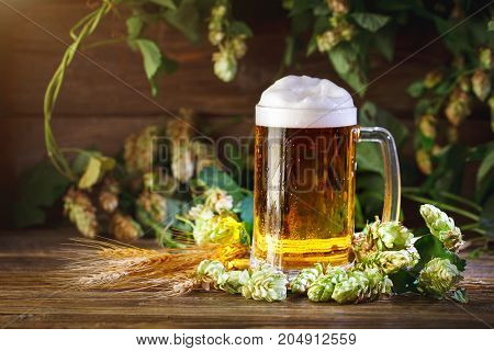 A glass of fresh beer and green hops on a wooden table.