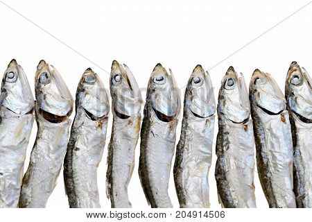 Row of dried small fish isolared on white background