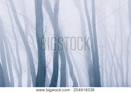 Mist In Silent Forest.