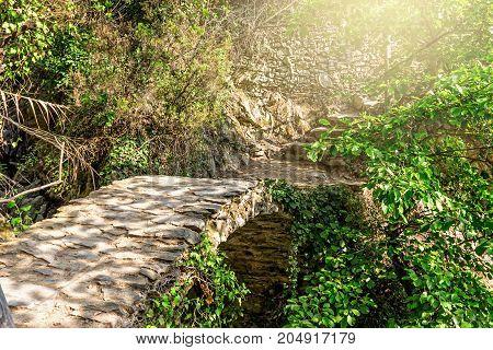 Walk Way Through The Forest