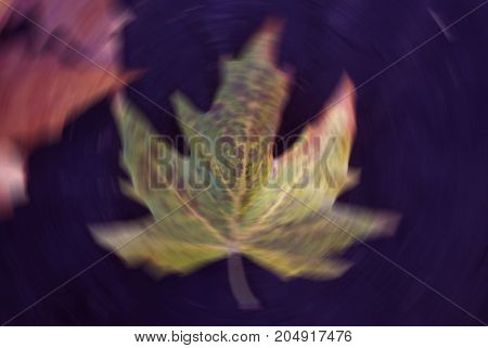 Nature blur autumn leaf wallpaper. Soft focus light on view leaves flare rays abstract.