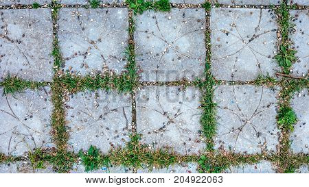 Tile in city with small stones and grass sprouts between the tiles. Summer style road on the playground.