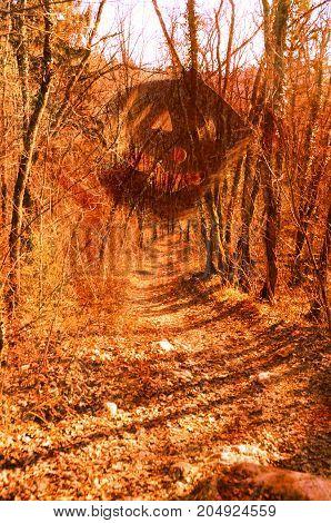 Pumpkin And Woods