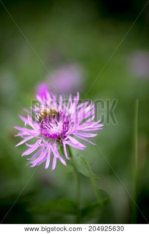 A small bee about to produce the delicious honey.