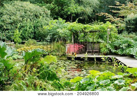 Green Water garden with red acer in centre