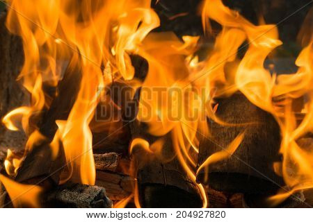the orange flames of the bonfire dance on the blackened firewood