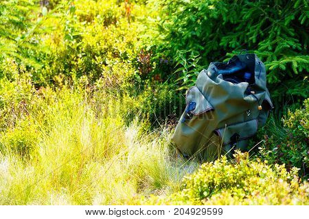 blueberry , Vaccinium myrtillus, in mountain land, blueberry in forest and natural bag