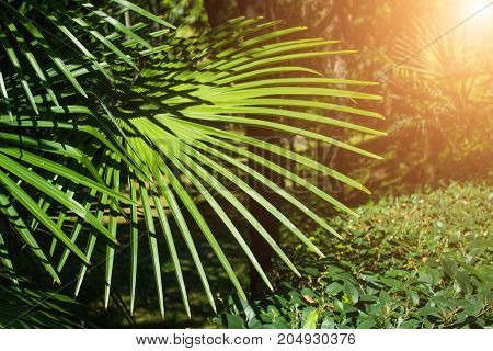 Beautiful young palm tree close-up of a tropical scene