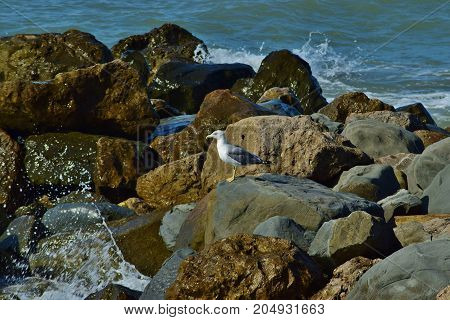 A lone Seagull stands on a large rock next to the rolling sea.