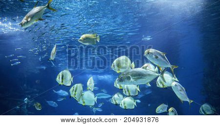 Picture of group of sea fish swimming underwater