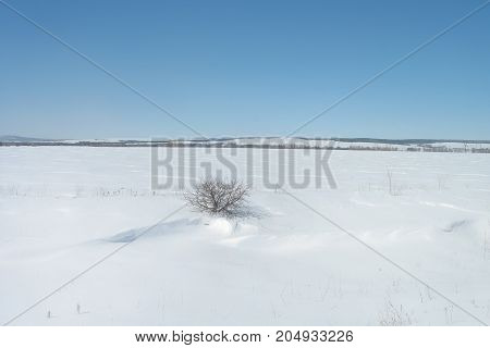lone Bush standing in the middle of a snowy field