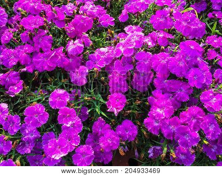 beautiful purple flower for natural background .