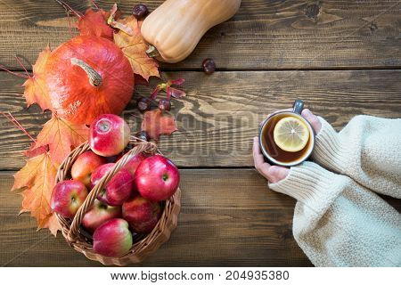 Cup of warming tea with lemon in hand and autumn harvest pumpkin apples colorful autumn leaves on wooden board. Fall still life vintage style. Top view.