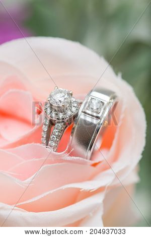 Wedding ring on a pink rose - stock image