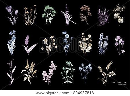 Collection of beautiful wild herbs, herbaceous flowering plants, blooming flowers, shrubs and subshrubs isolated on black background. Hand drawn detailed botanical vector illustration
