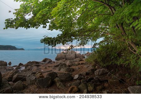 Tree crown with lush foliage on sea shore during dawn. View from coastal on calm sea bay surrounded by green hills.
