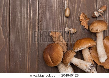 Cep Mushrooms. Boletus Oak Leaves And Acorns On The Wooden Surface. Autumn Template.the View From Th
