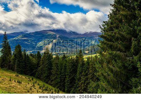 Autumn coniferous forest on the hillside in the Ukrainian Carpathians. Beautiful cloudy sky.